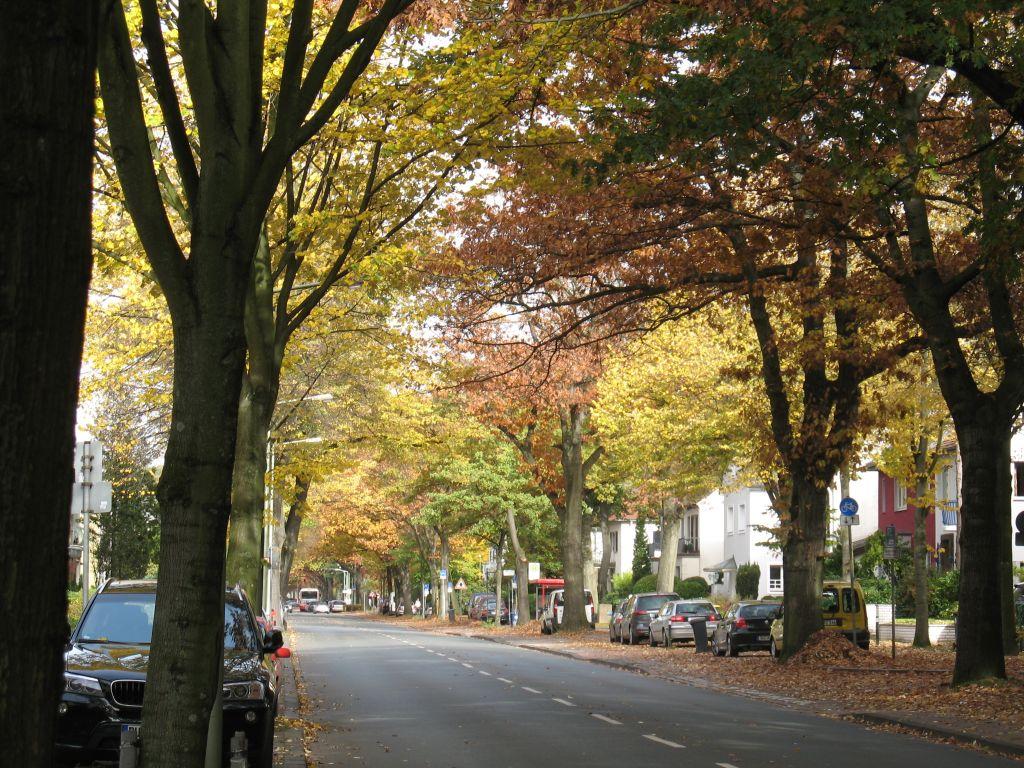 HerbstLicht2