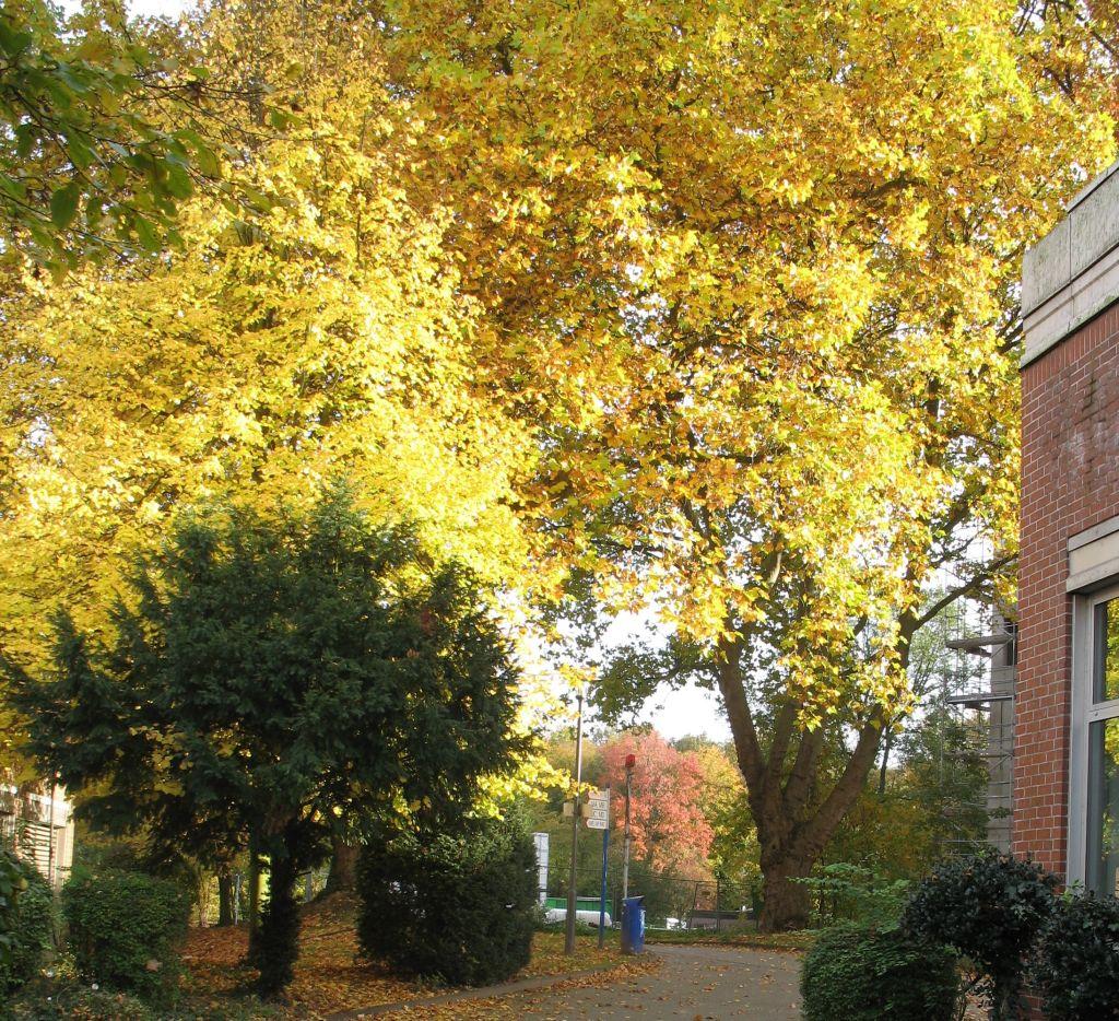 HerbstLicht5