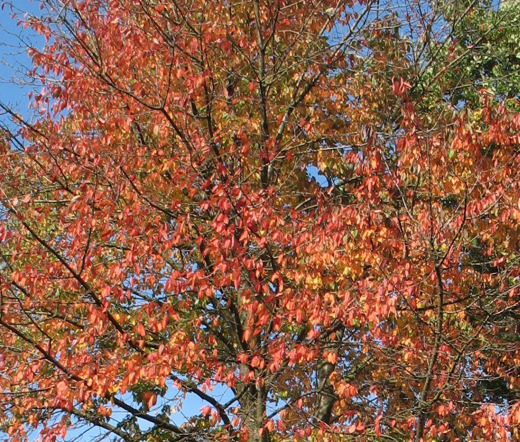 HerbstLicht8