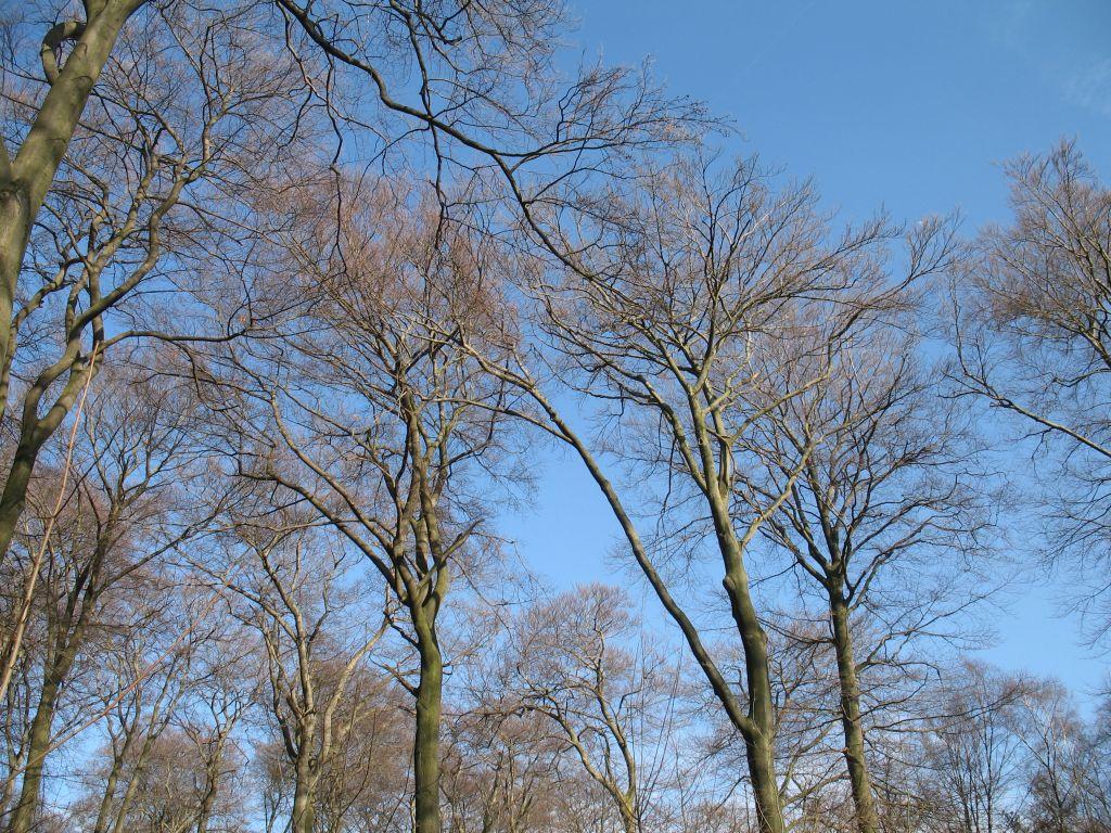 Wald-14-03-A