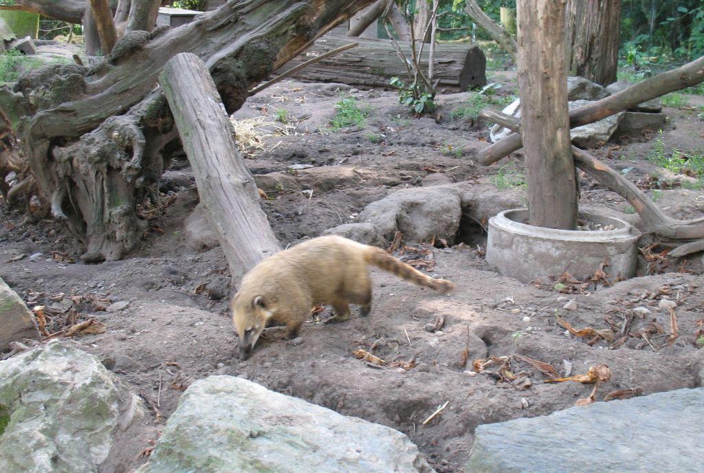 zoo15-10
