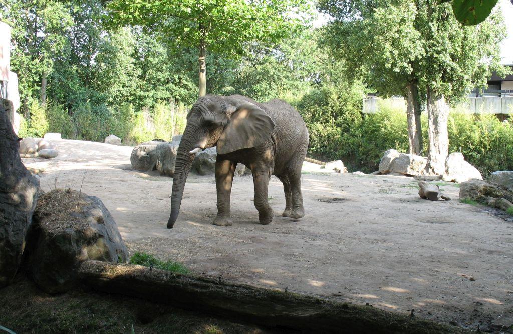 zoo15-24