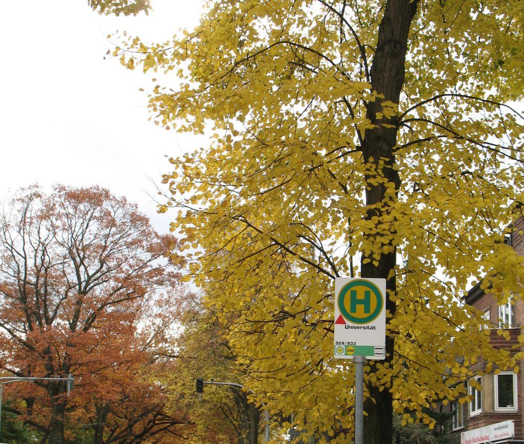 HerbstLicht3