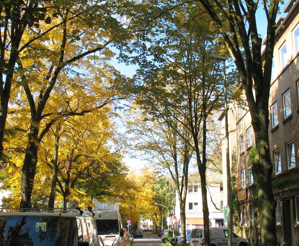 HerbstLicht6