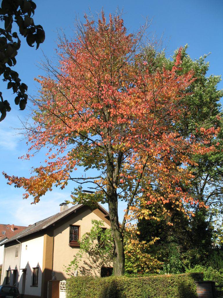 HerbstLicht7