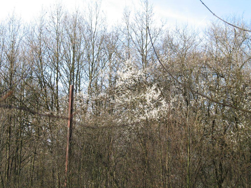 Wald-14-03-B