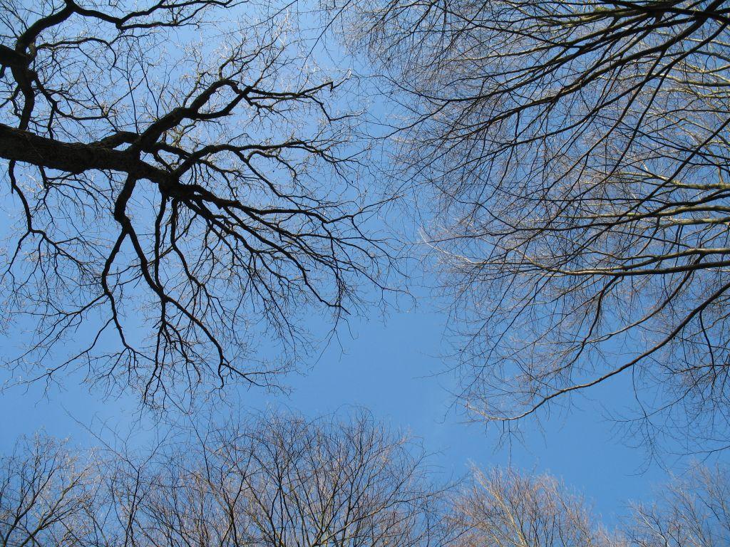Wald-14-03-E