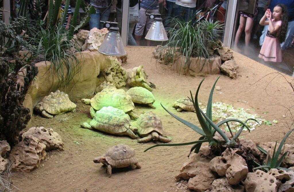 zoo15-03