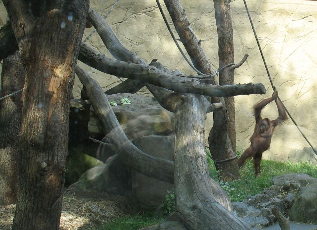 zoo15-04