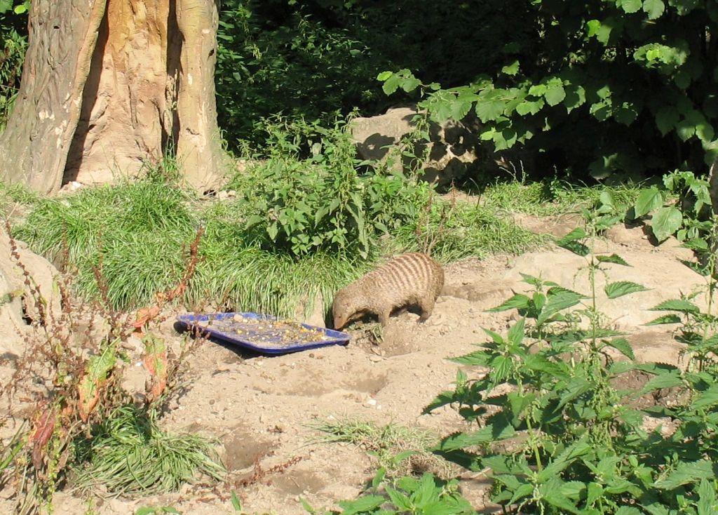 zoo15-12