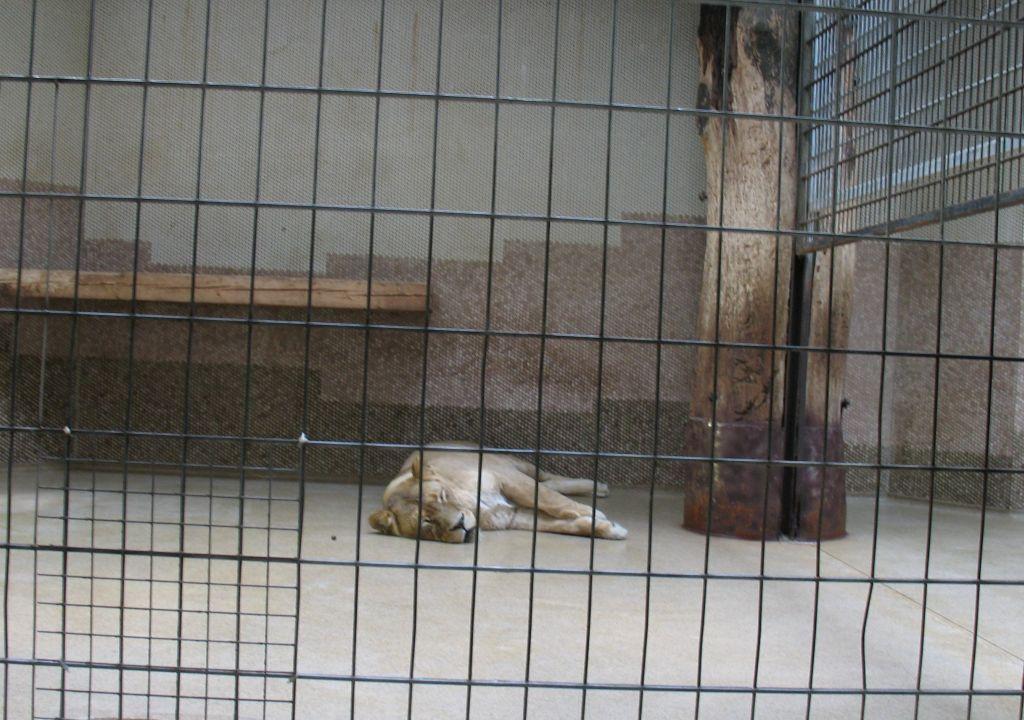 zoo15-22