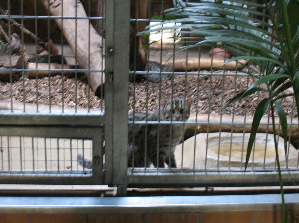 zoo15-23