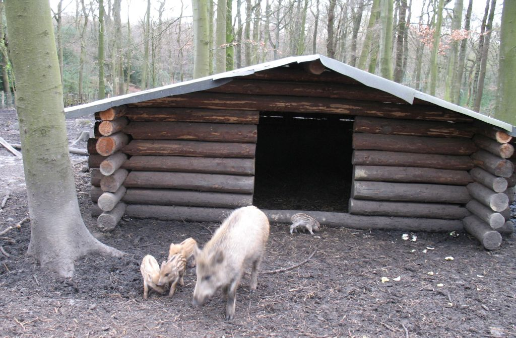 Schwein3
