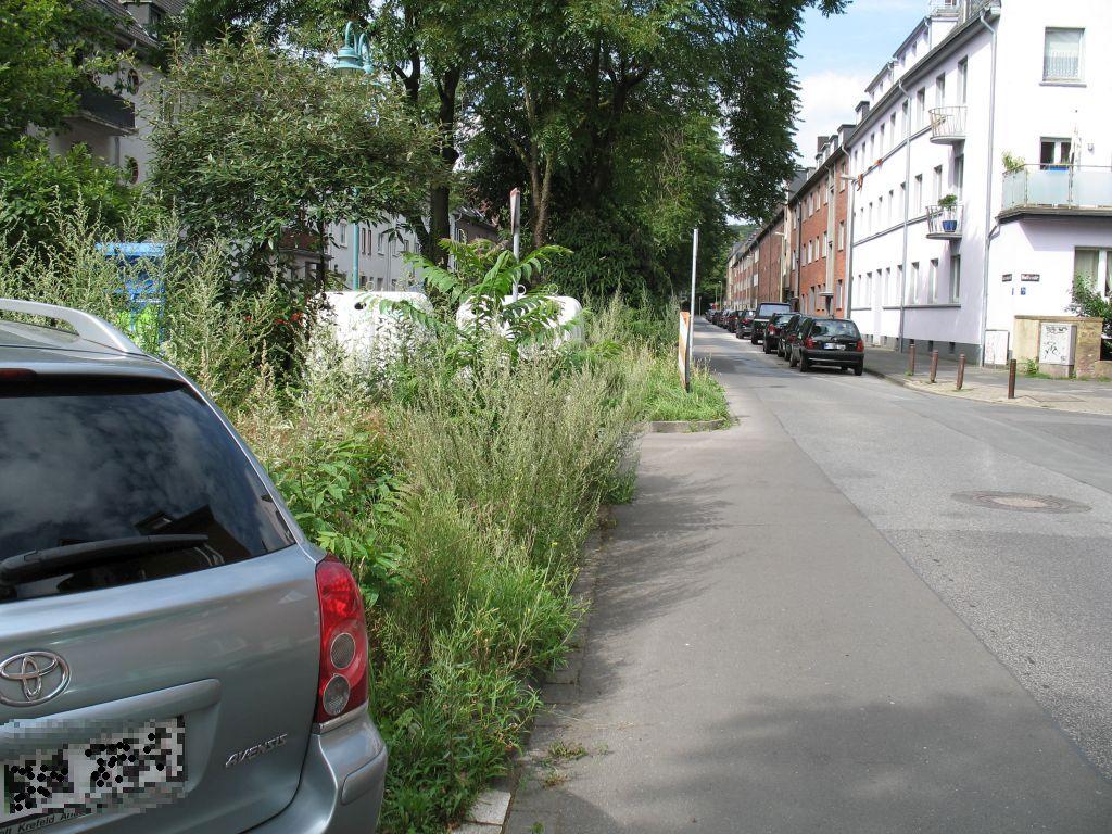Unkraut-6