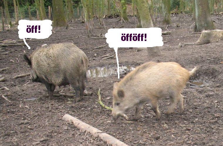 schweinoeff